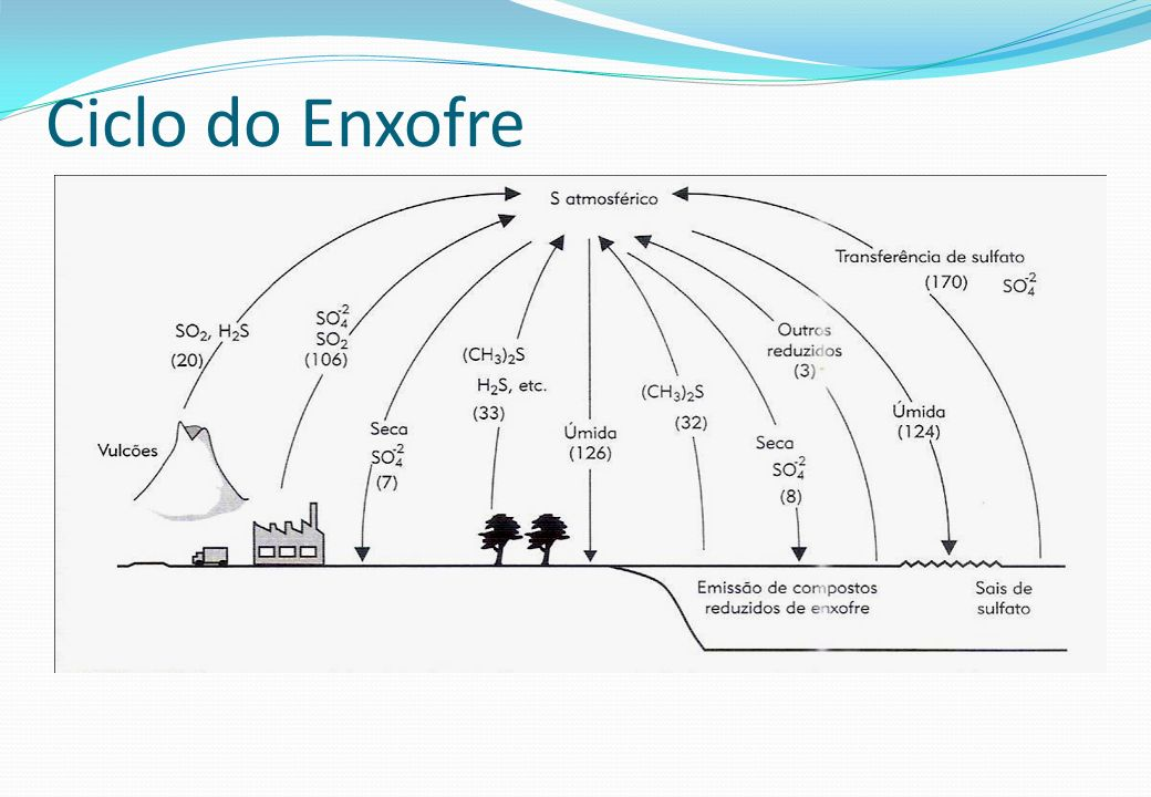 Ciclo do Enxofre