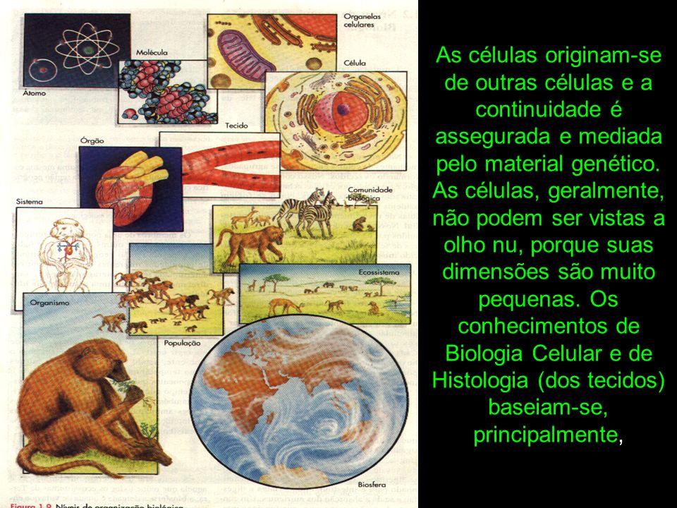 As células originam-se de outras células e a continuidade é assegurada e mediada pelo material genético.