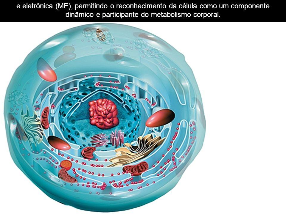 e eletrônica (ME), permitindo o reconhecimento da célula como um componente dinâmico e participante do metabolismo corporal.