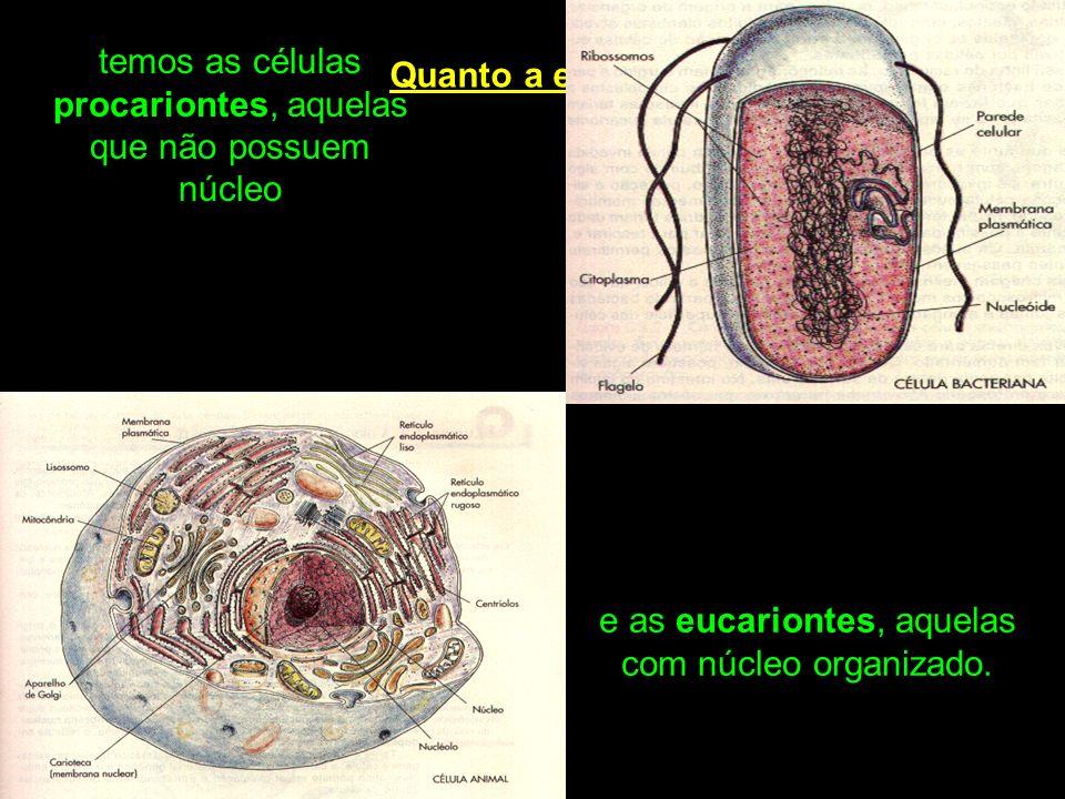 temos as células procariontes, aquelas que não possuem núcleo