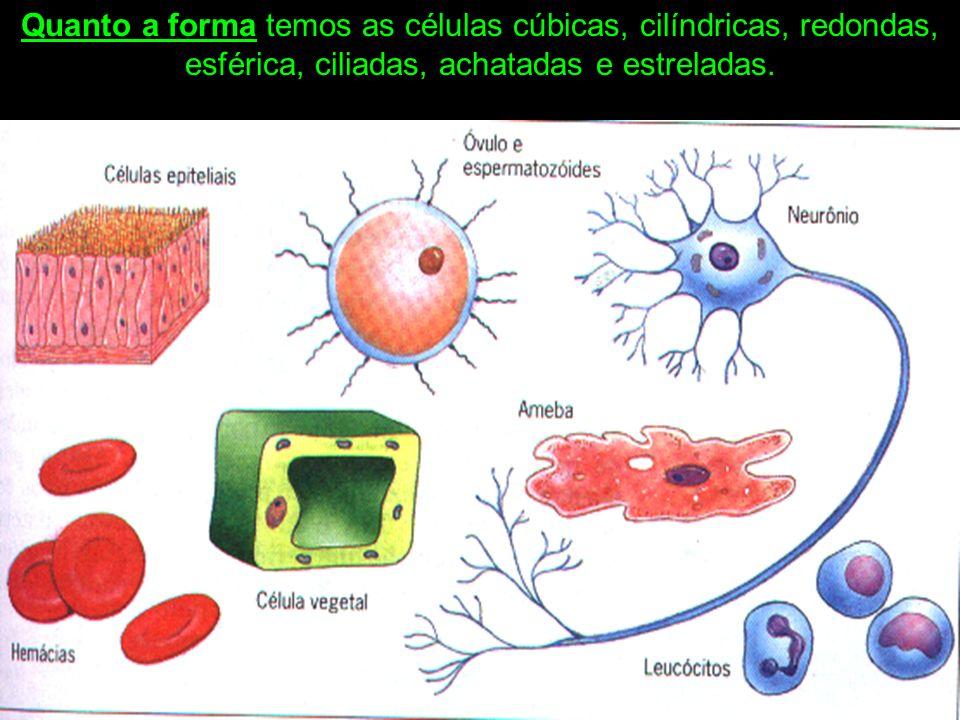 Quanto a forma temos as células cúbicas, cilíndricas, redondas, esférica, ciliadas, achatadas e estreladas.