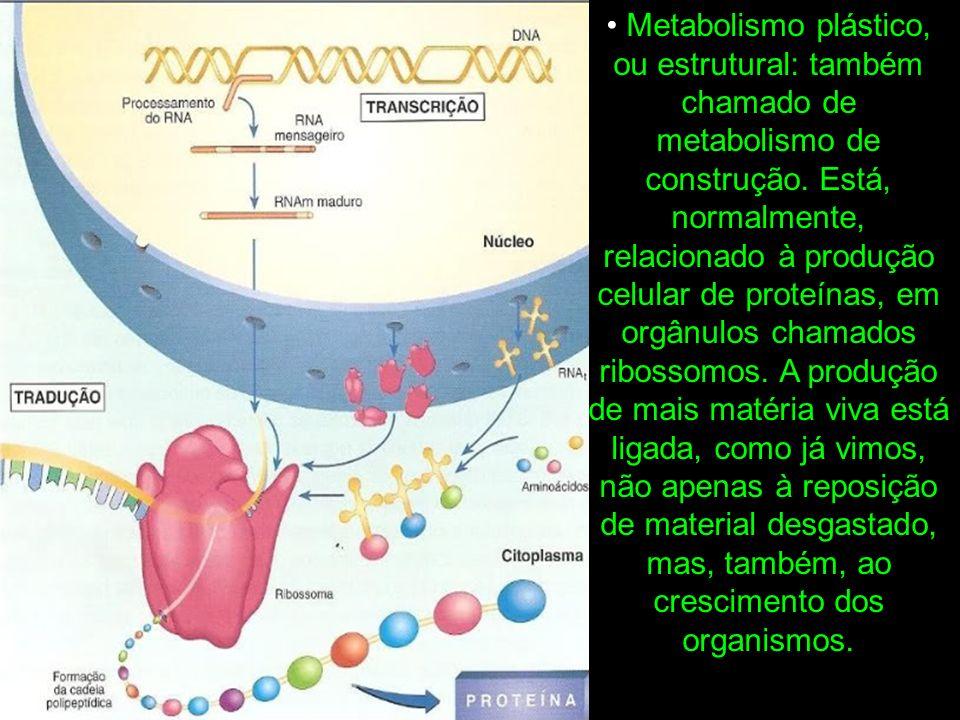 • Metabolismo plástico, ou estrutural: também chamado de metabolismo de construção.
