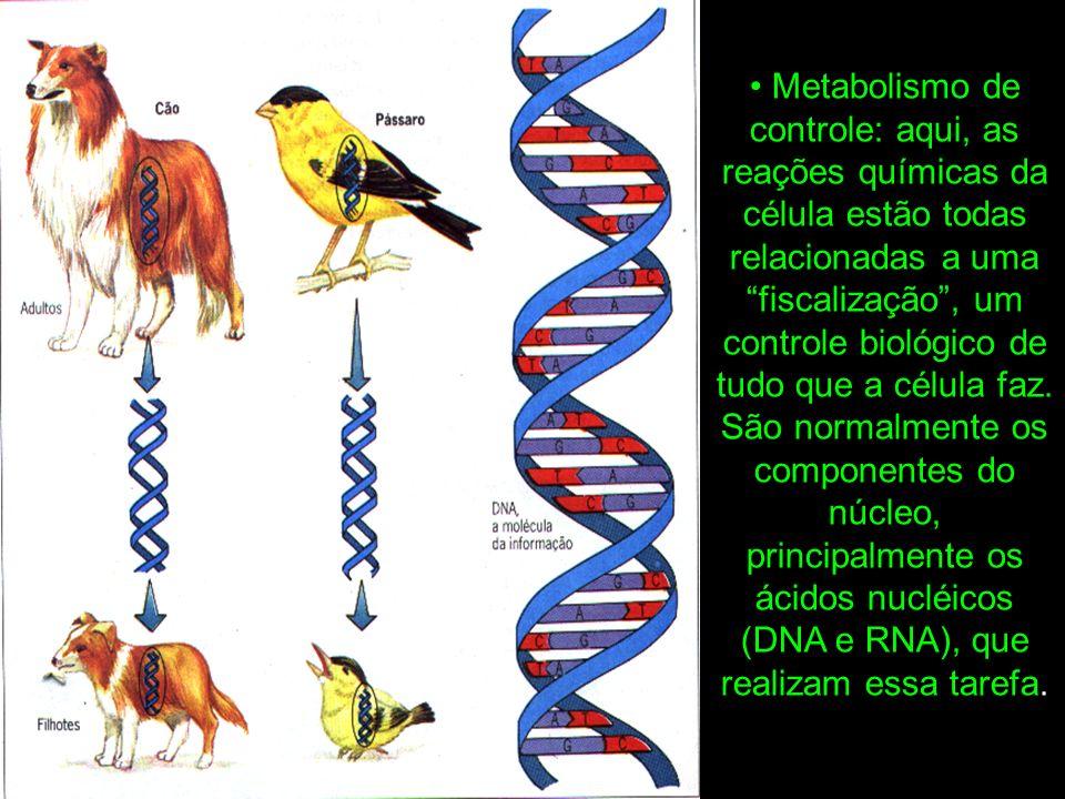 • Metabolismo de controle: aqui, as reações químicas da célula estão todas relacionadas a uma fiscalização , um controle biológico de tudo que a célula faz.