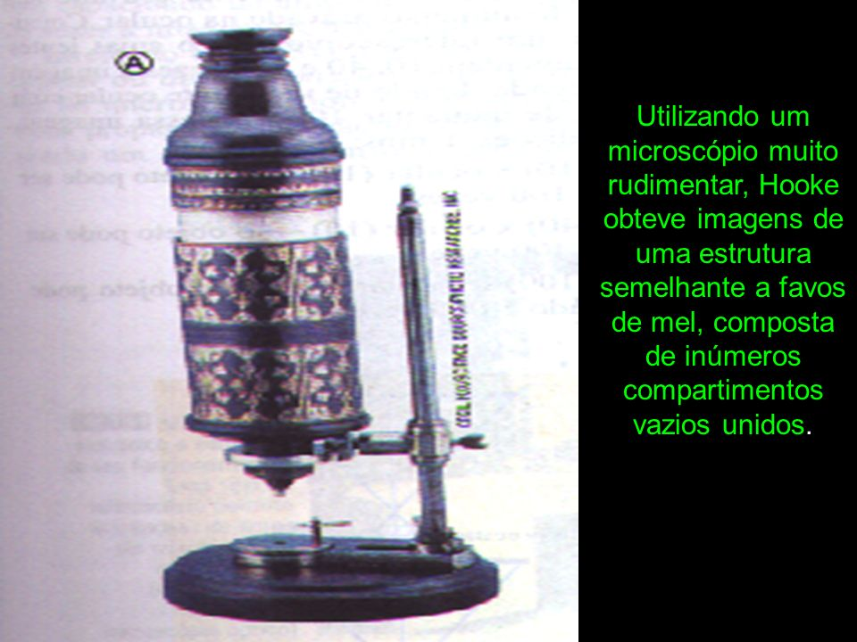 Utilizando um microscópio muito rudimentar, Hooke obteve imagens de uma estrutura semelhante a favos de mel, composta de inúmeros compartimentos vazios unidos.