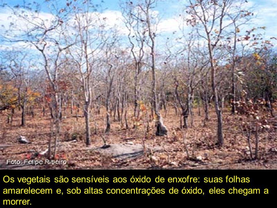 Os vegetais são sensíveis aos óxido de enxofre: suas folhas amarelecem e, sob altas concentrações de óxido, eles chegam a morrer.