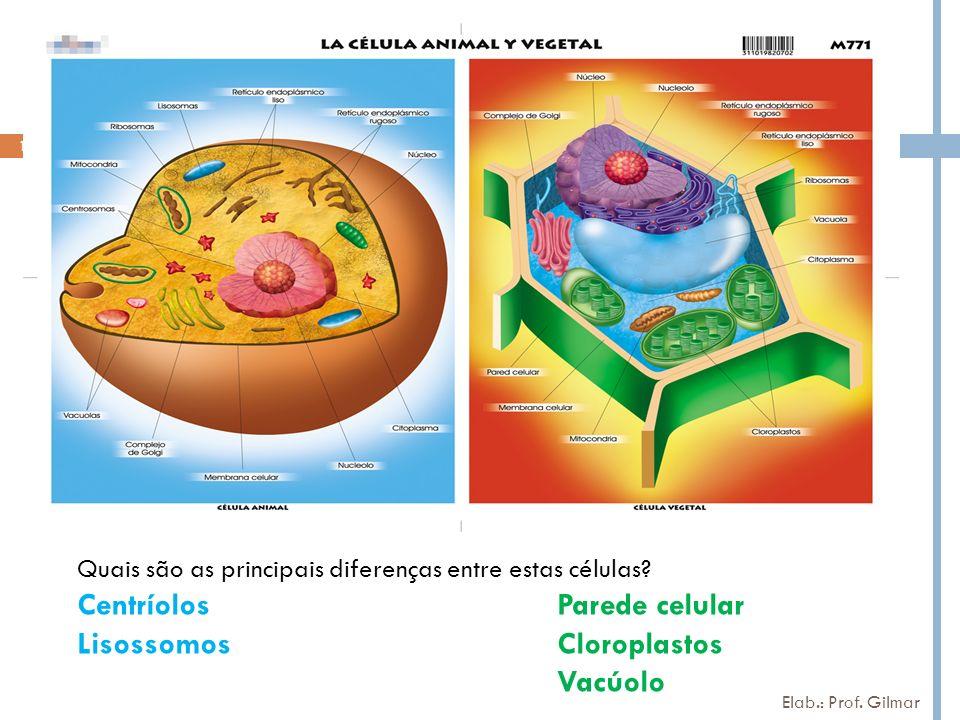 Centríolos Parede celular Lisossomos Cloroplastos
