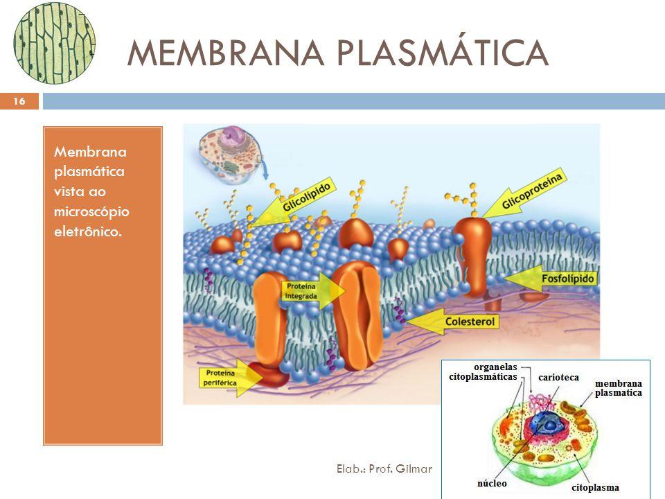 MEMBRANA PLASMÁTICA Membrana plasmática vista ao microscópio eletrônico.