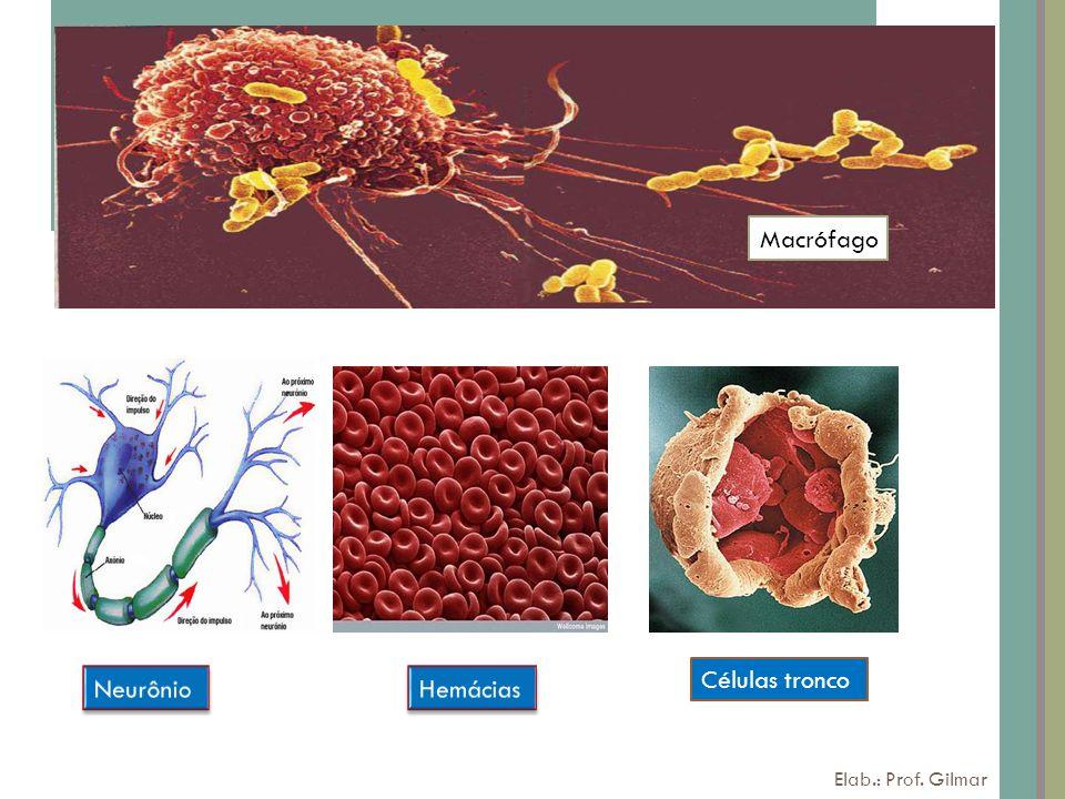 Macrófago Células tronco Neurônio Hemácias Elab.: Prof. Gilmar