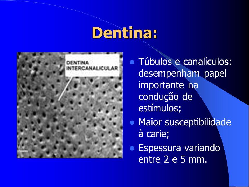 Dentina:Túbulos e canalículos: desempenham papel importante na condução de estímulos; Maior susceptibilidade à carie;