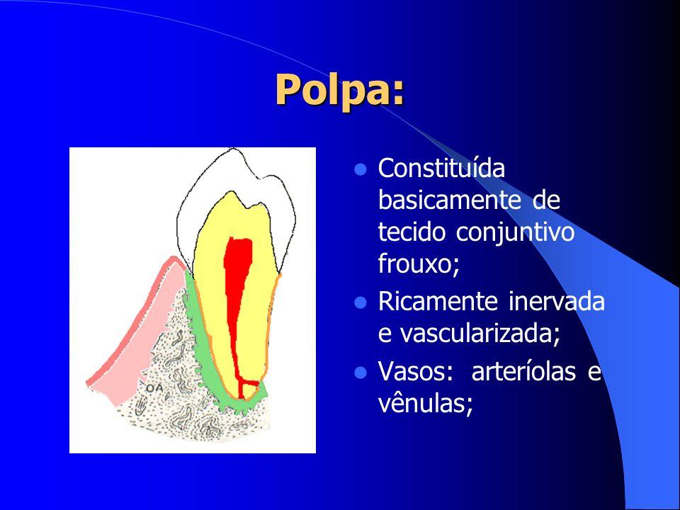 Polpa: Constituída basicamente de tecido conjuntivo frouxo;