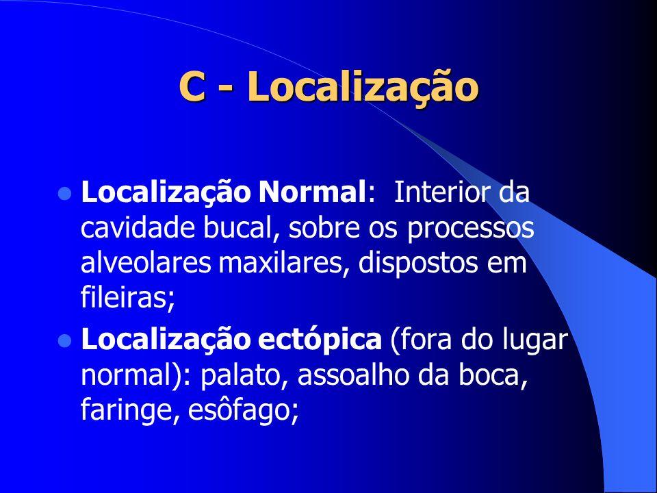 C - Localização Localização Normal: Interior da cavidade bucal, sobre os processos alveolares maxilares, dispostos em fileiras;