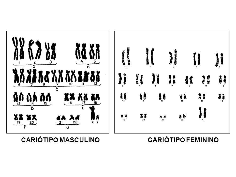 CARIÓTIPO MASCULINO CARIÓTIPO FEMININO