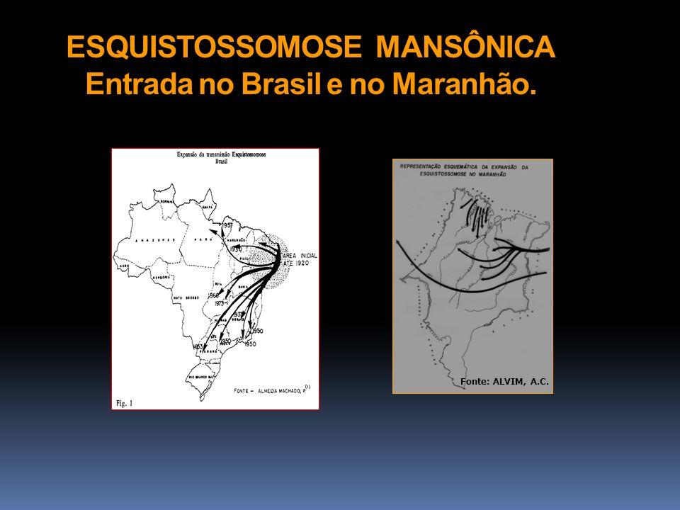 ESQUISTOSSOMOSE MANSÔNICA Entrada no Brasil e no Maranhão.