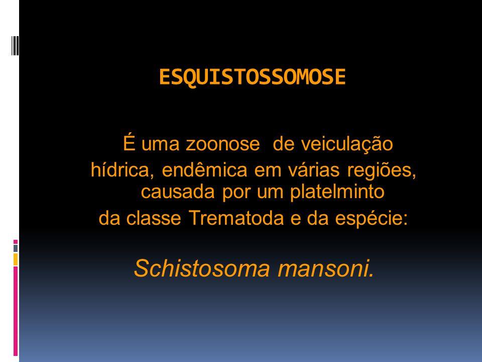 ESQUISTOSSOMOSE Schistosoma mansoni.