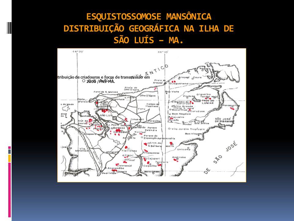 Distribuição de criadouros e focos de transmissão em 2000 /FNS-MA.