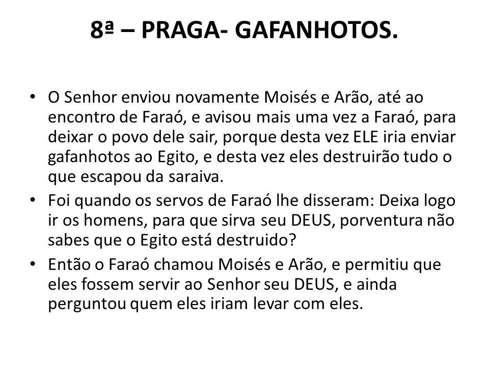 8ª – PRAGA- GAFANHOTOS.