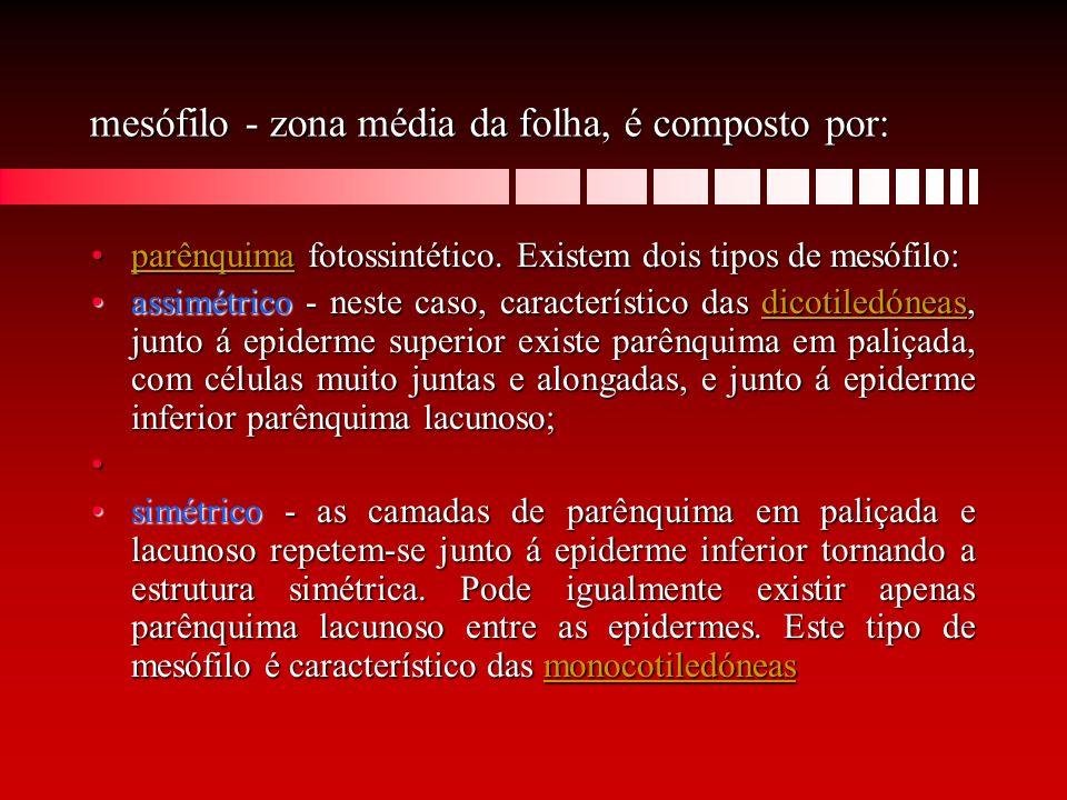 mesófilo - zona média da folha, é composto por: