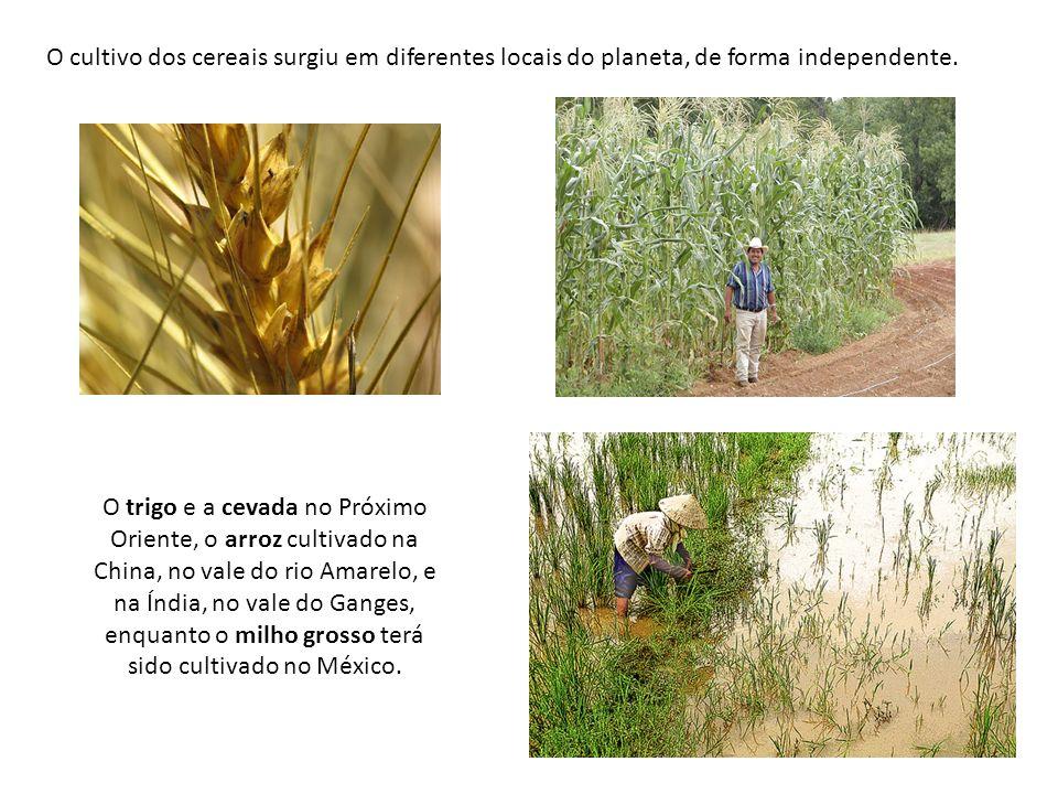 O cultivo dos cereais surgiu em diferentes locais do planeta, de forma independente.