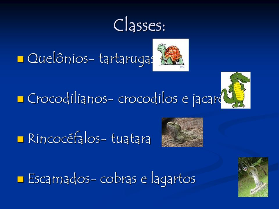 Classes: Quelônios- tartarugas Crocodilianos- crocodilos e jacarés