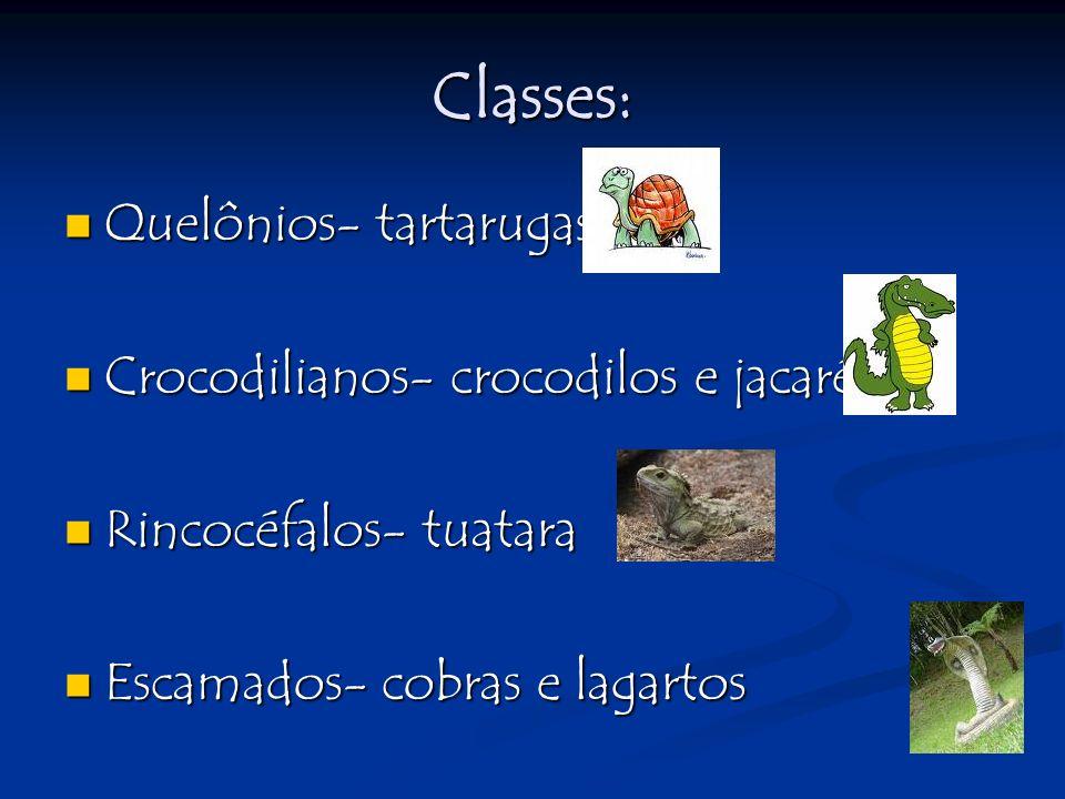 Classes: Quelônios- tartarugas Crocodilianos- crocodilos e jacarés