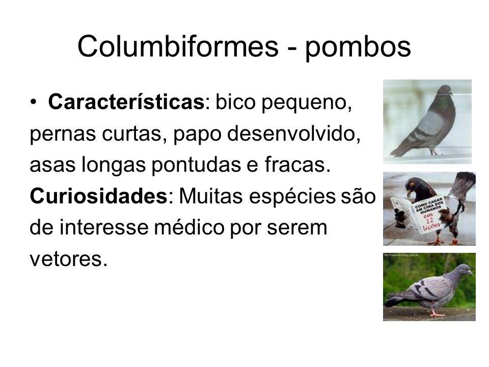 Columbiformes - pombos