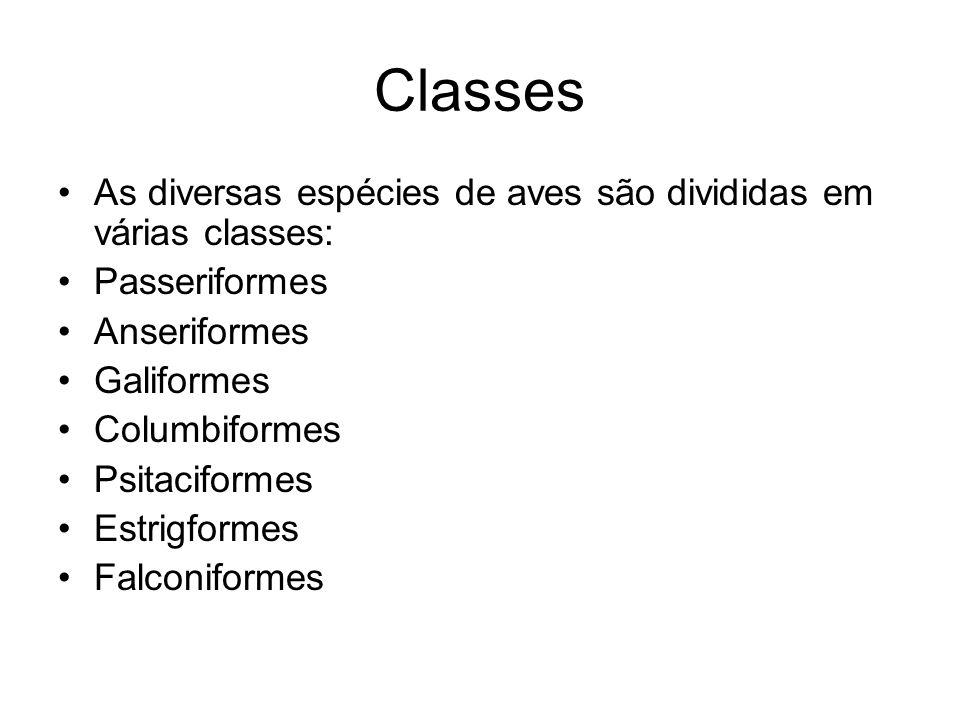 Classes As diversas espécies de aves são divididas em várias classes: