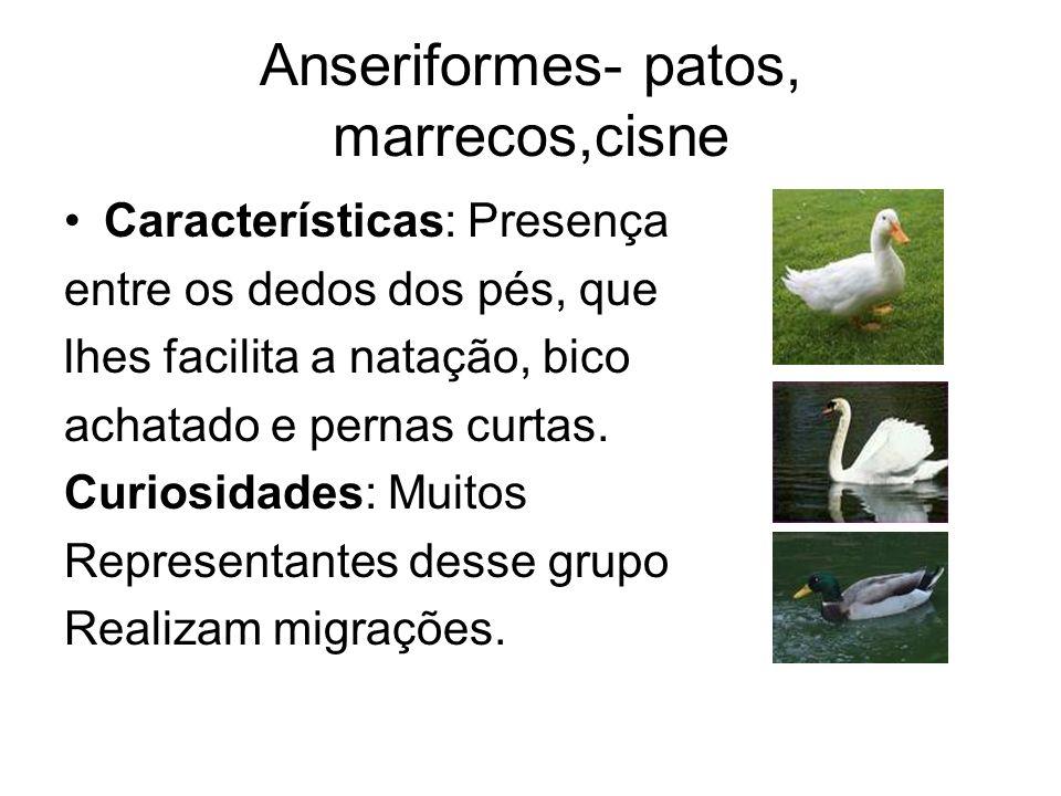Anseriformes- patos, marrecos,cisne