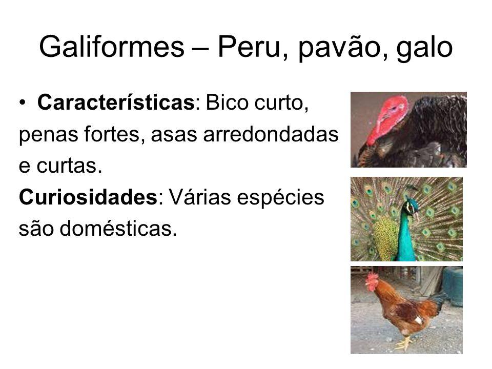 Galiformes – Peru, pavão, galo