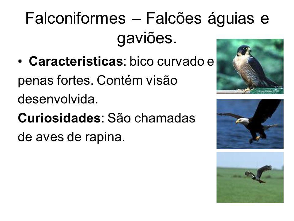 Falconiformes – Falcões águias e gaviões.