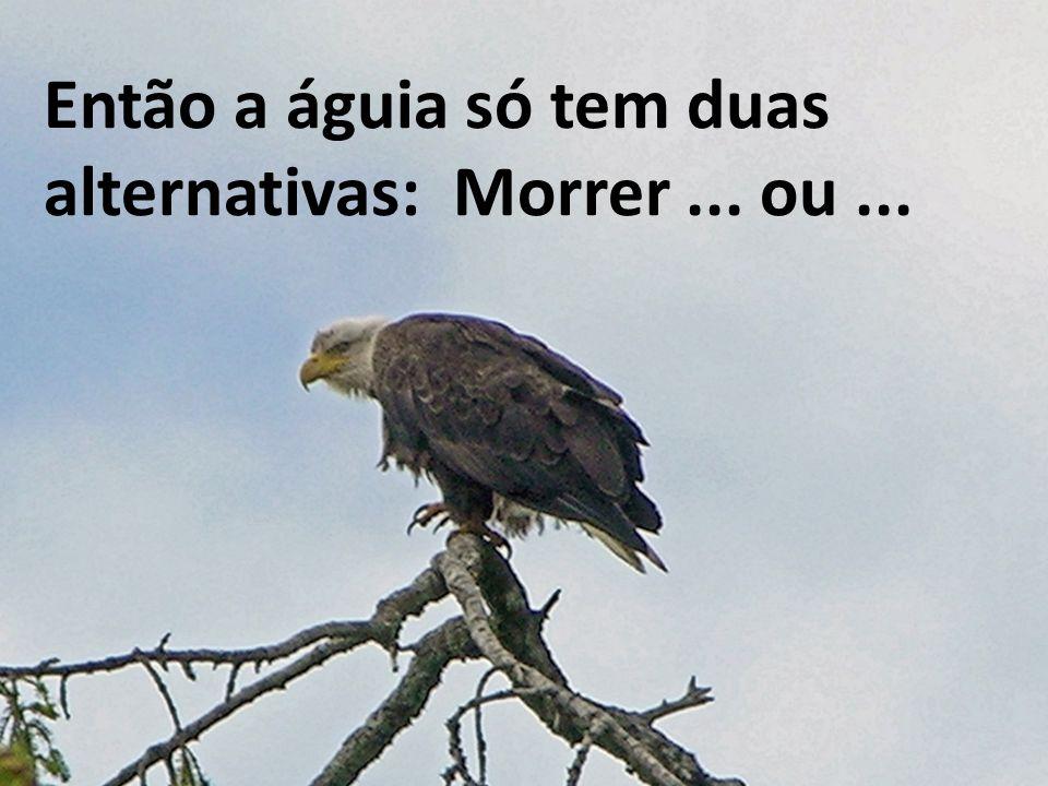 Então a águia só tem duas alternativas: Morrer ... ou ...