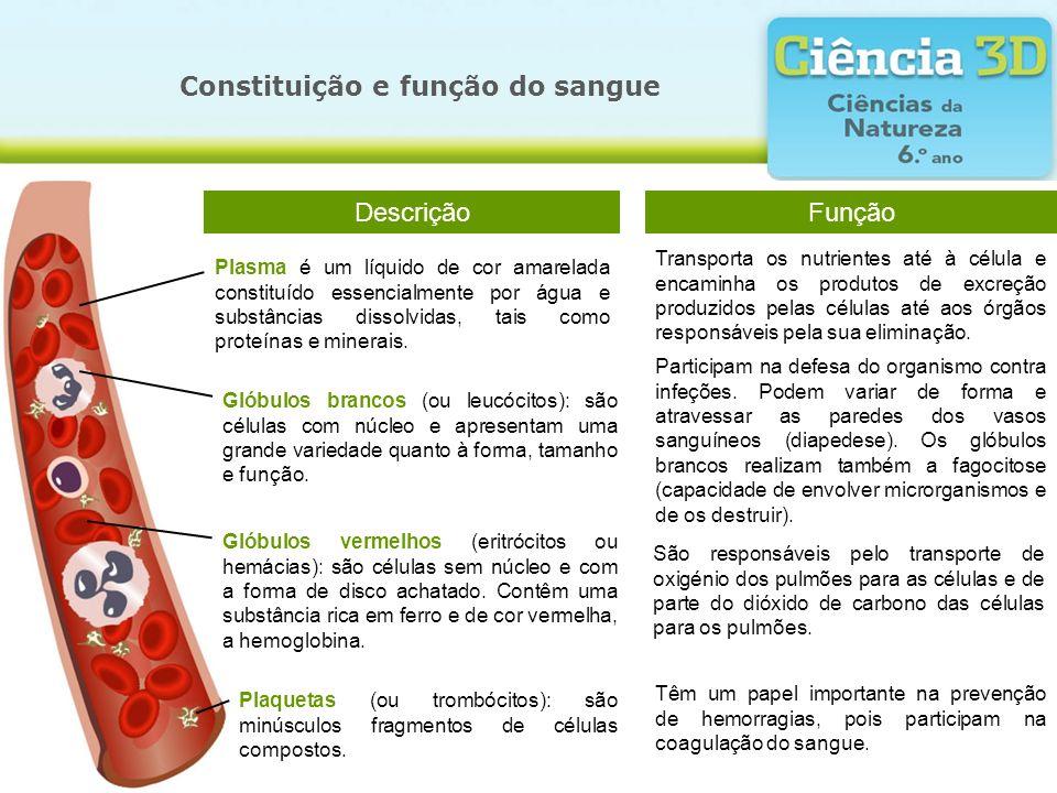 Constituição e função do sangue