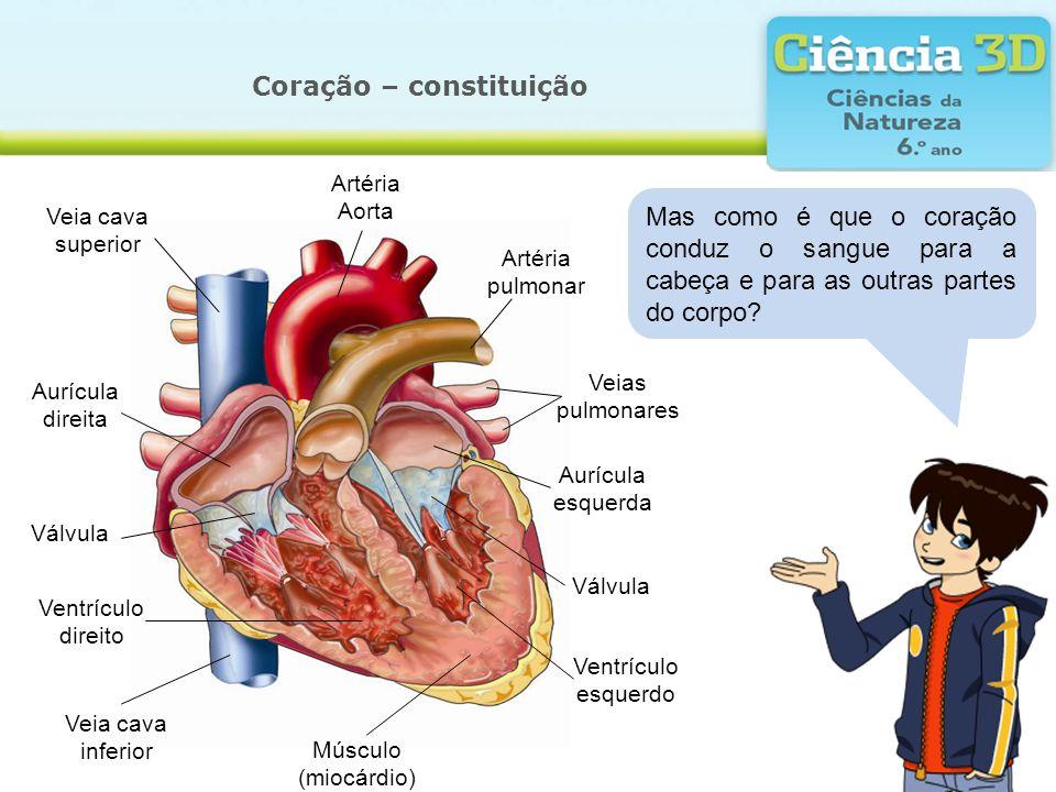 Coração – constituição
