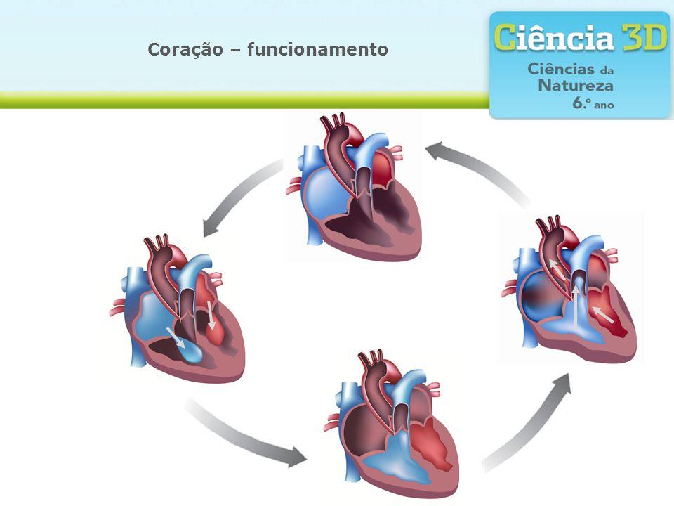 Coração – funcionamento