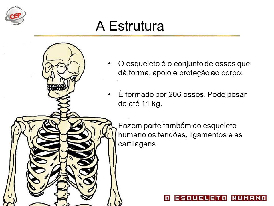 A Estrutura O esqueleto é o conjunto de ossos que dá forma, apoio e proteção ao corpo. É formado por 206 ossos. Pode pesar de até 11 kg.