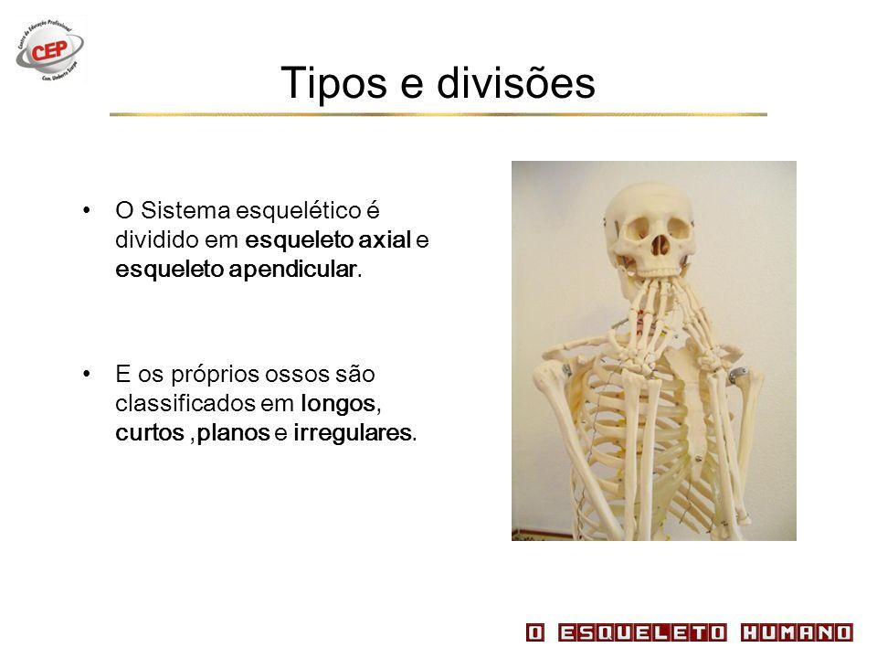 Tipos e divisões O Sistema esquelético é dividido em esqueleto axial e esqueleto apendicular.