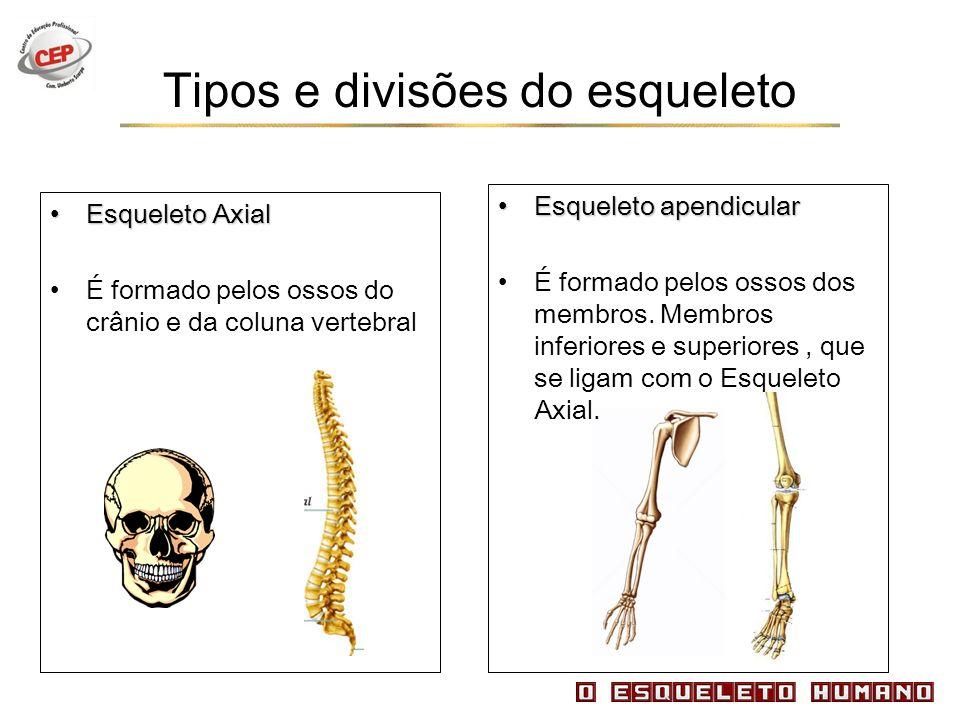 Tipos e divisões do esqueleto