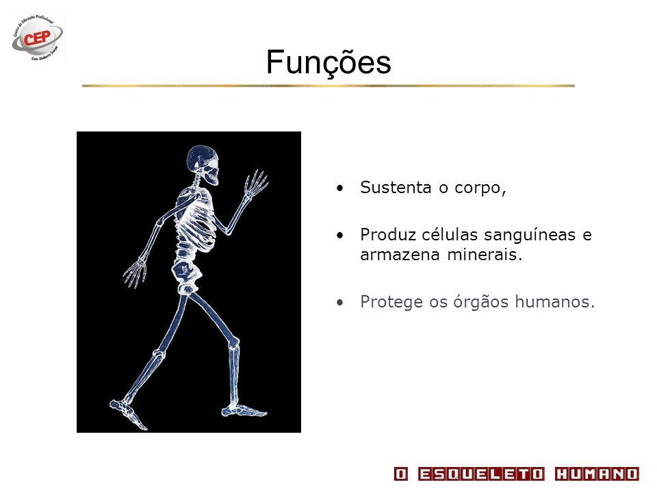 Funções Sustenta o corpo,