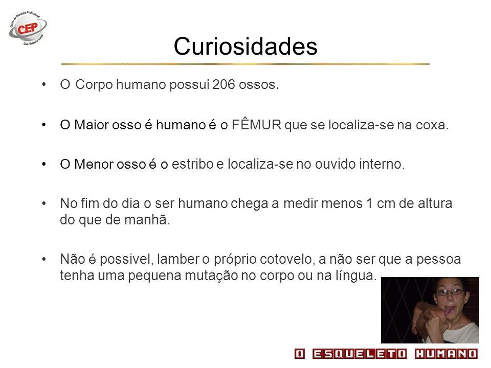 Curiosidades O Corpo humano possui 206 ossos.