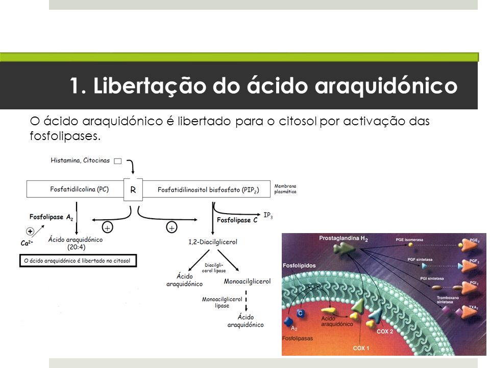 1. Libertação do ácido araquidónico