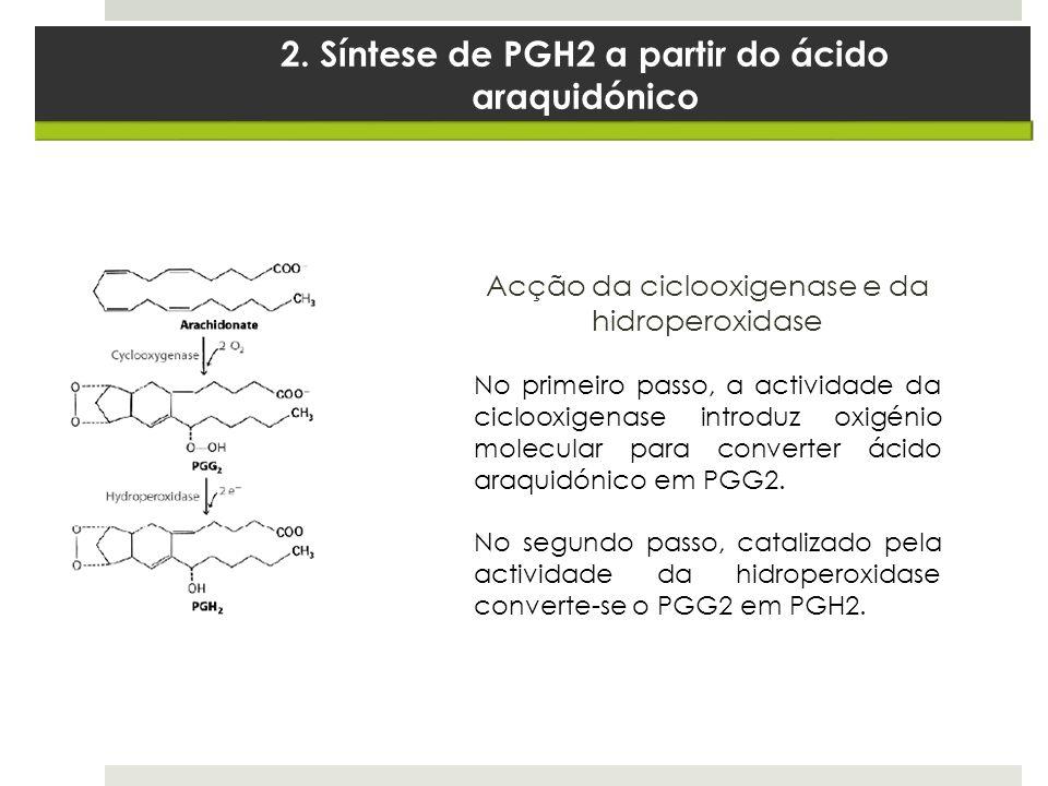 2. Síntese de PGH2 a partir do ácido araquidónico