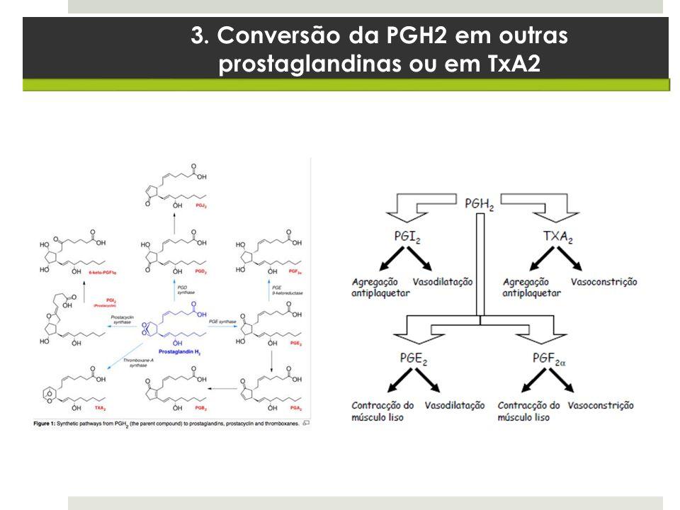 3. Conversão da PGH2 em outras prostaglandinas ou em TxA2