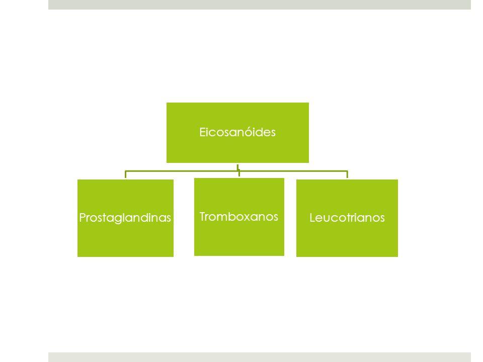 Eicosanóides Prostaglandinas Tromboxanos Leucotrianos