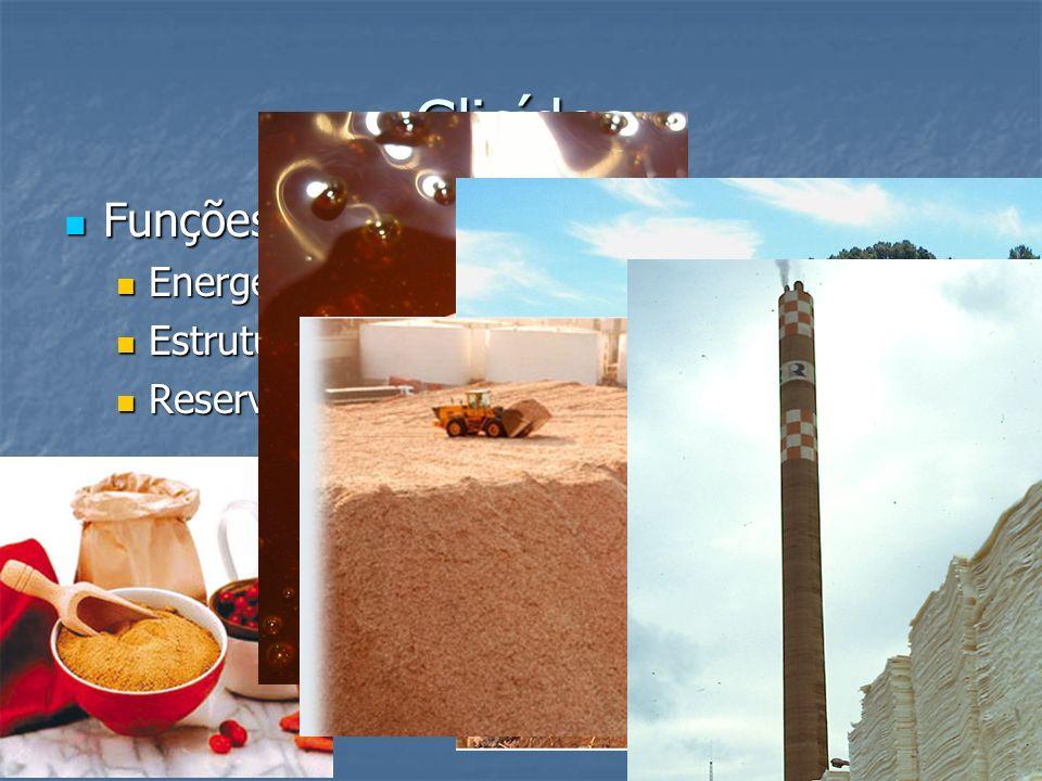 Glicídos Funções Energética; Estrutural; Reserva de energia;