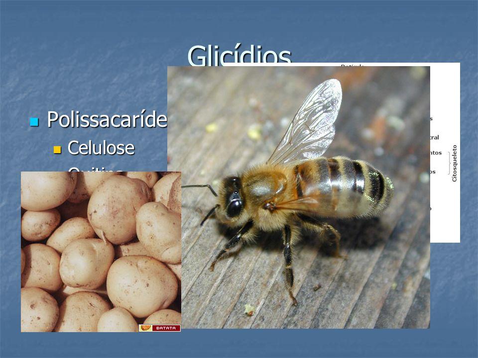 Glicídios Polissacarídeos Celulose Quitina Amido glicogênio