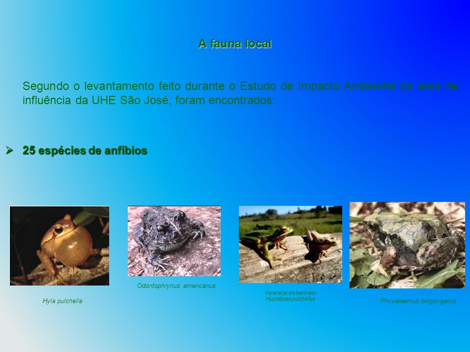 A fauna local Segundo o levantamento feito durante o Estudo de Impacto Ambiental da área de influência da UHE São José, foram encontrados: