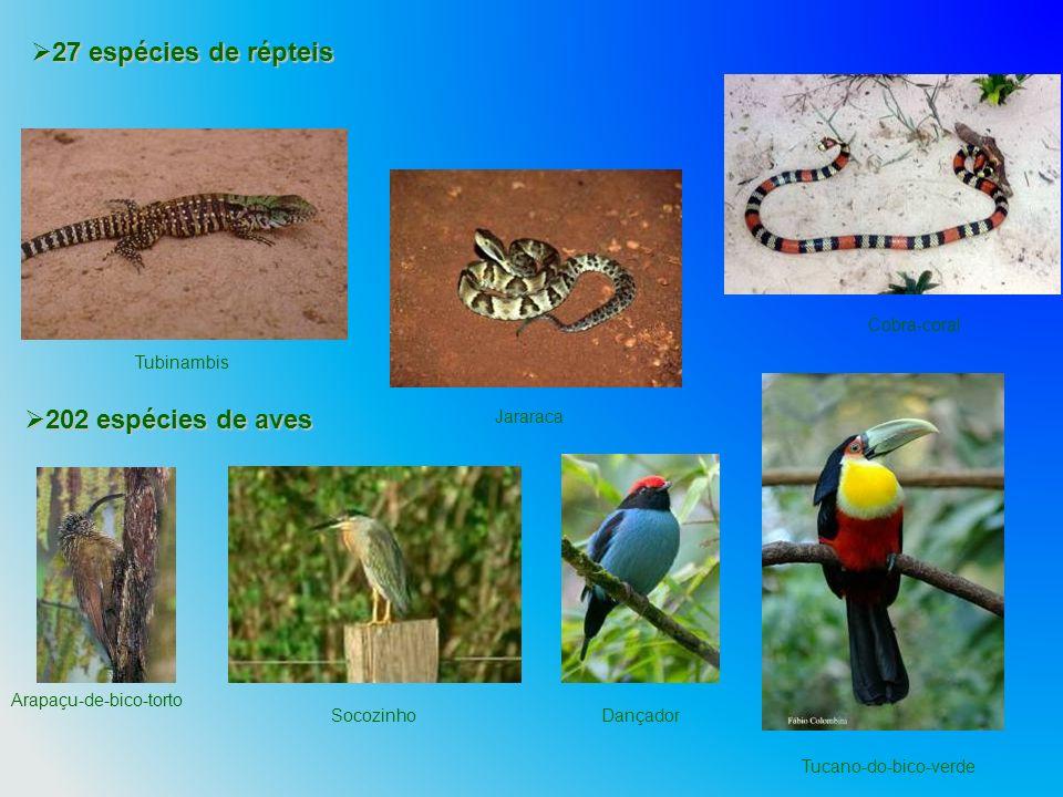 27 espécies de répteis 202 espécies de aves Cobra-coral Tubinambis