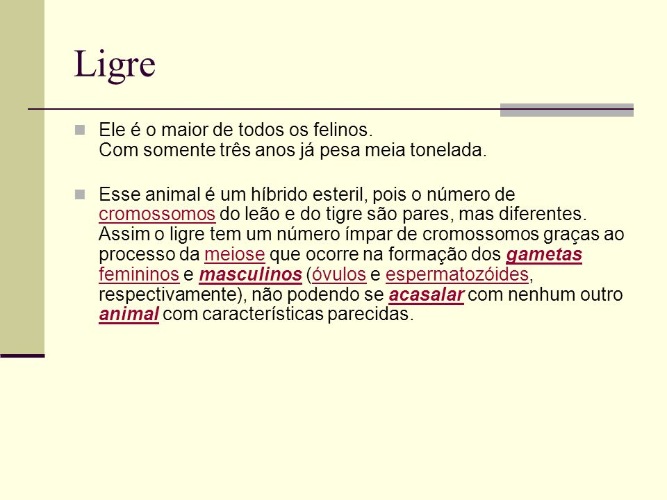 LigreEle é o maior de todos os felinos. Com somente três anos já pesa meia tonelada.