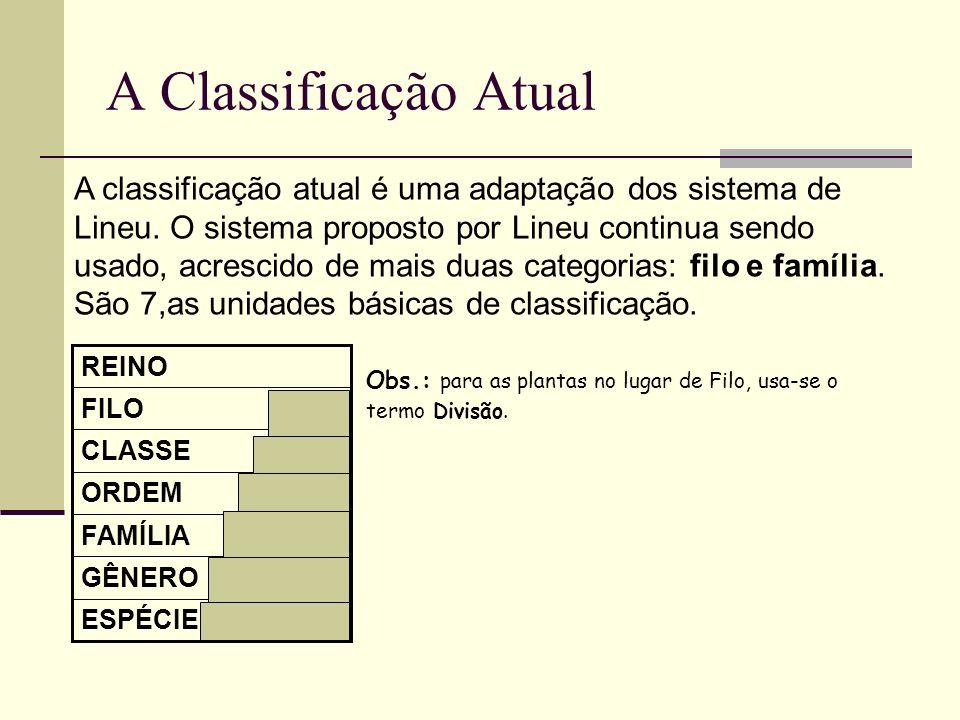 A Classificação Atual