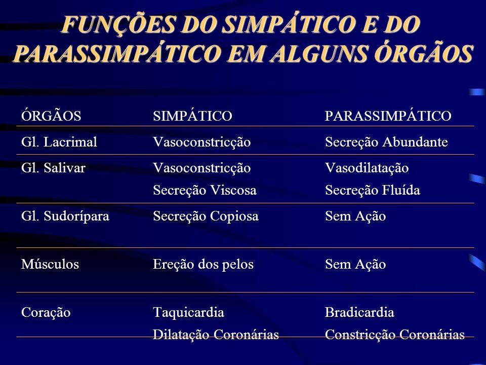FUNÇÕES DO SIMPÁTICO E DO PARASSIMPÁTICO EM ALGUNS ÓRGÃOS