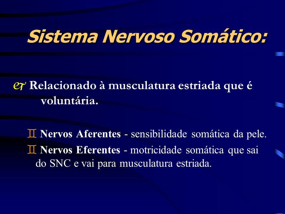 Sistema Nervoso Somático: